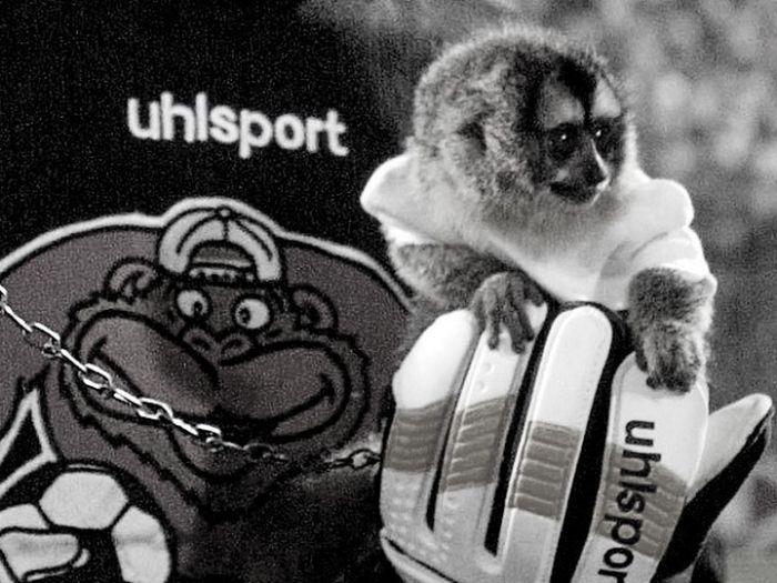 Легенда об убийстве обезьяны-вратаря советским футболистом Виктором Понедельником (2 фото)