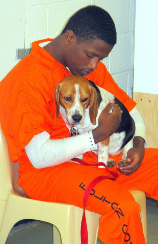 В одной из тюрем США заключенным разрешили брать на воспитание бездомных собак (7 фото)