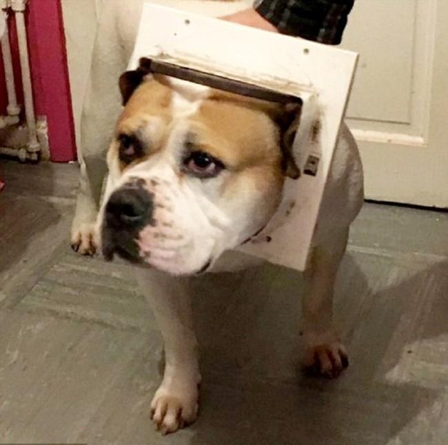 На что готова собака ради продолжения рода (3 фото)