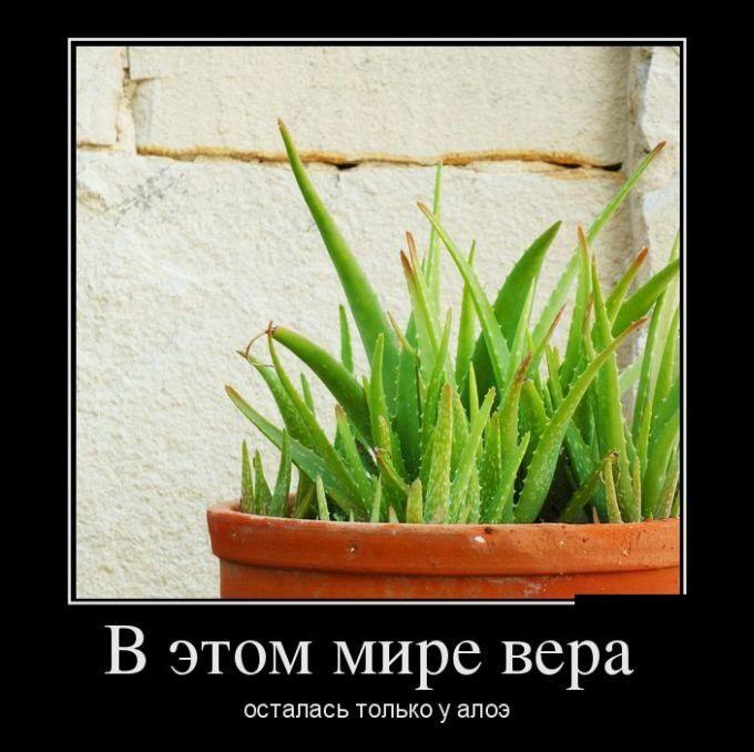 http://cdn.trinixy.ru/pics5/20151119/demotivatory_29.jpg