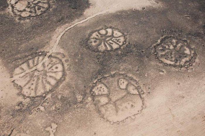 Пустынные «воздушные змеи» на Ближнем Востоке (6 фото)