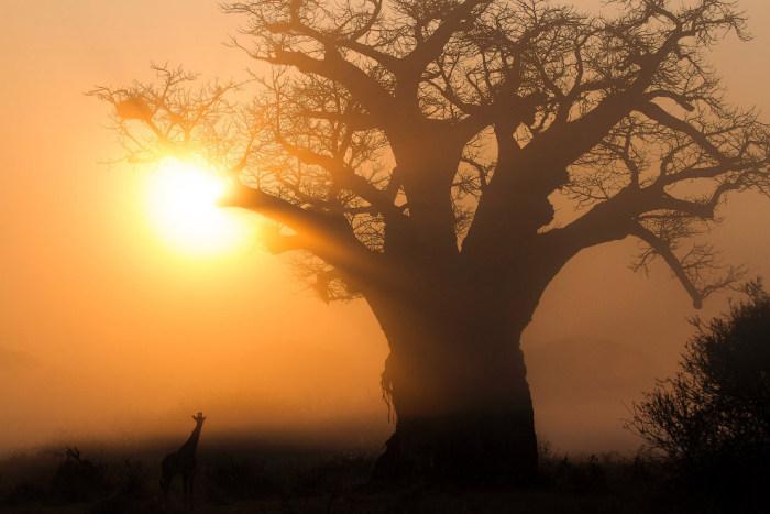 Снимки Криса Реншоу, лучшего фотографа Африки этого года (15 фото)