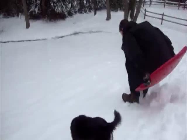 Собаки резвятся в снегу