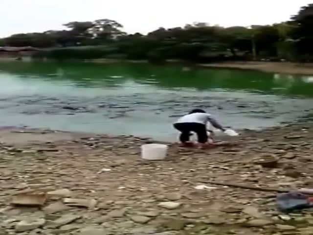 Голодные рыбы «выходят» на берег, чтобы поесть