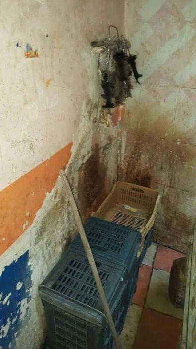 Ужасы египетского завода по розливу сока (15 фото)