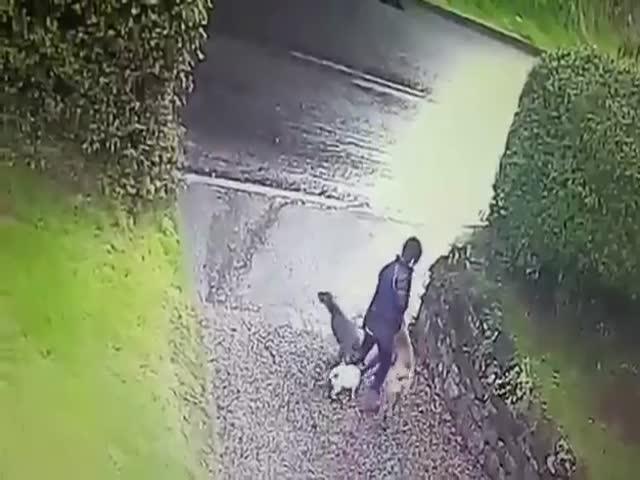 Собаки утащили девушку