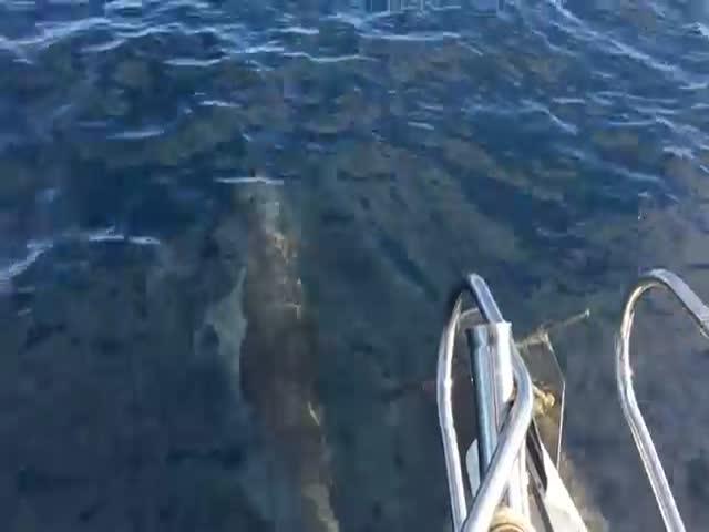 Морские млекопитающие присоединились к рыбакам