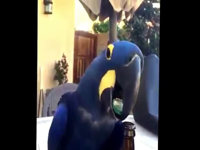 Попугай открывает бутылку с пивом