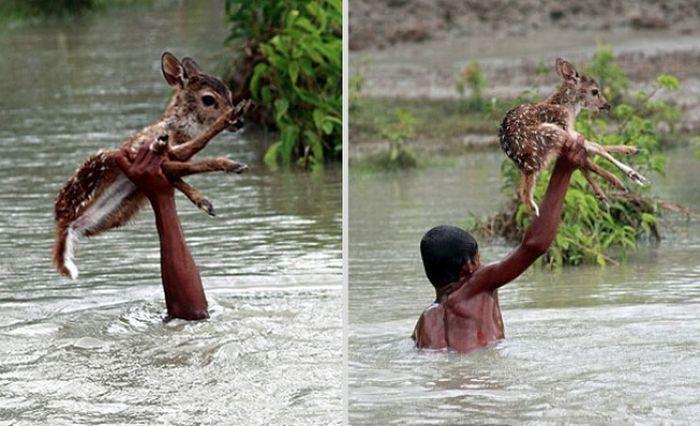 Добрые поступки, сделавшие наш мир немножечко лучше (12 фото)