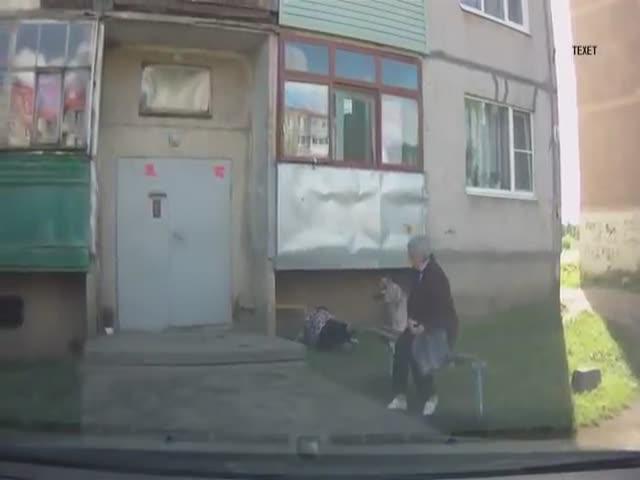Собака ударила хозяйку