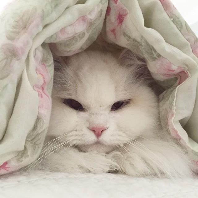 Что сделала любовь и забота с больным бездомным котенком (11 фото)
