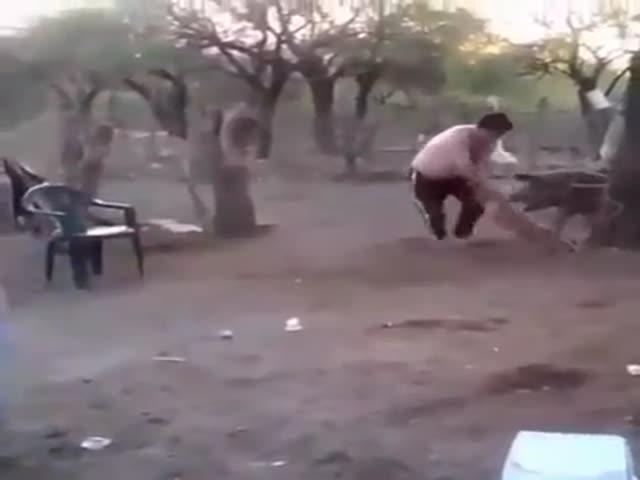Свинья заступилась за поросенка