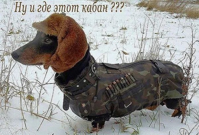 http://trinixy.ru/pics5/20151203/podborka_vecher_12.jpg