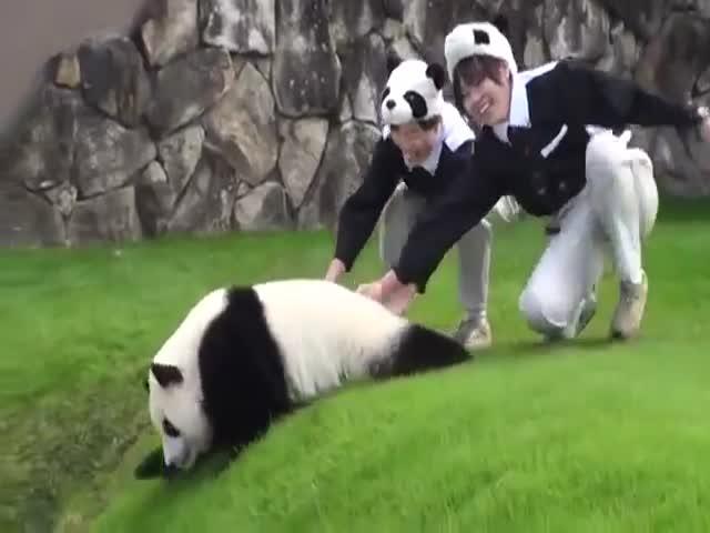 Сотрудница зоопарка помогает панде