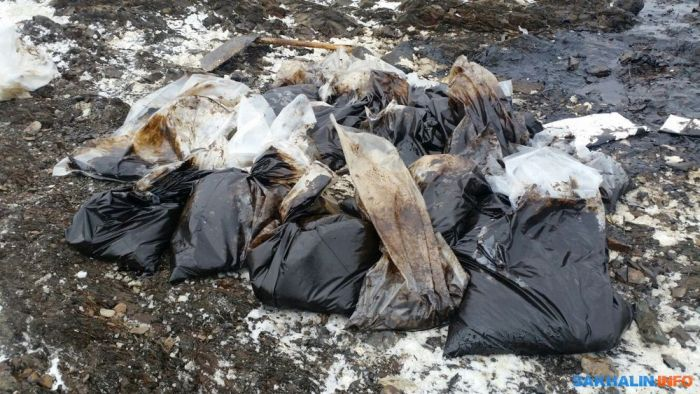 На Сахалине нефтяники спасают бакланов, испачкавшихся в мазуте (6 фото)