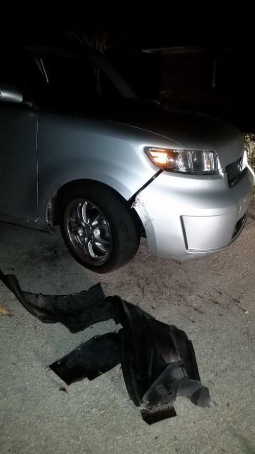 Автомобилю изрядно досталось от собак (6 фото)