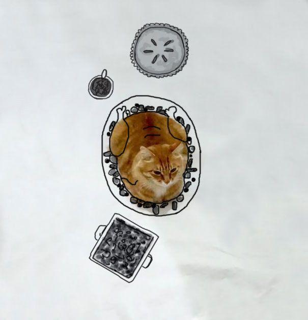 Новый тест на определение творческих способностей с фотографией кота (31 рисунок)