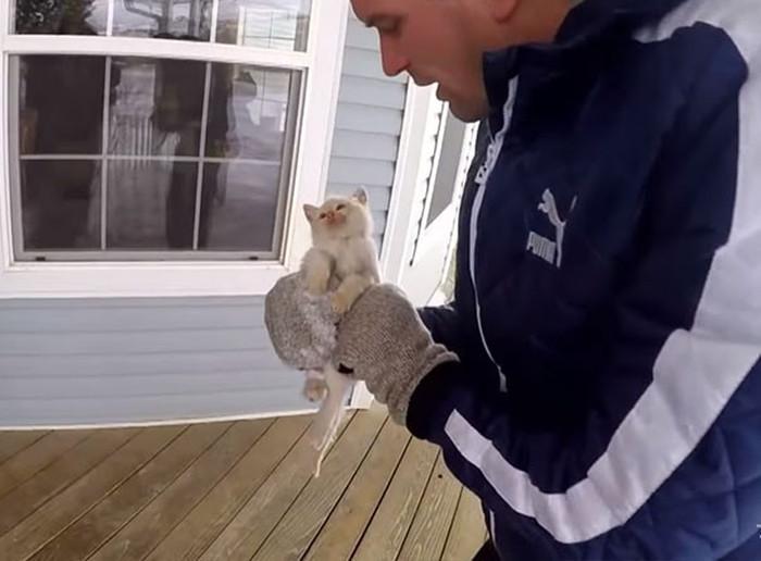 Трогательная история спасения котенка, найденного в сугробе (4 гифки)
