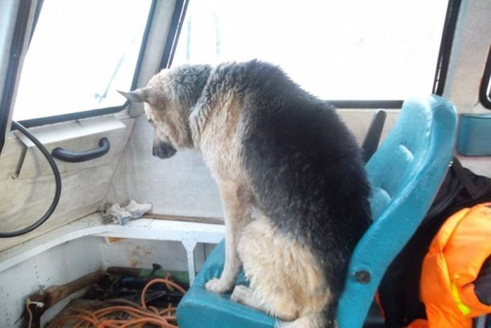 Спасатели спасли собаку, провалившуюся под лед