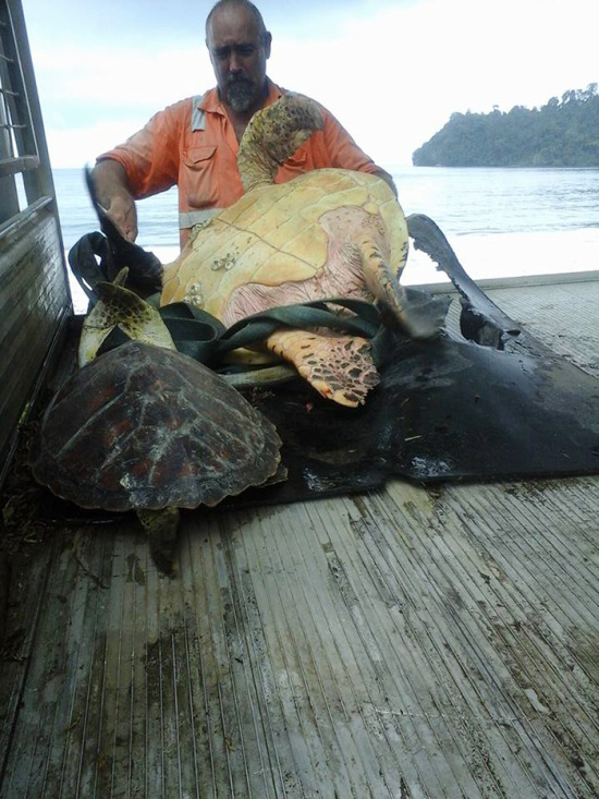 Мужчины покупают черепах на рынке, чтобы отпустить их обратно в океан (4 фото)