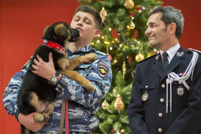 Очаровательный щенок Добрыня, подаренный российскими полицейскими французским коллегам (5 фото)