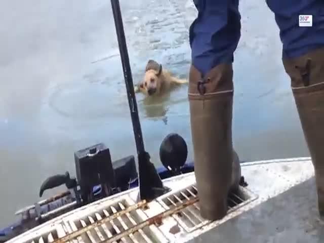 Мужики спасли собаку, провалившуюся под лед