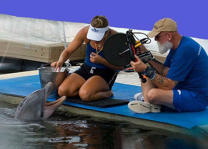 Ученые поняли, каким «видят» окружающий мир дельфины (5 фото)