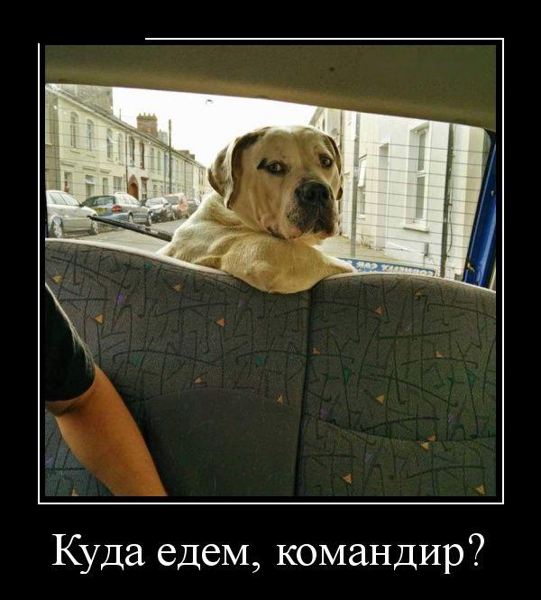 http://cdn.trinixy.ru/pics5/20151210/demotivatory_10.jpg