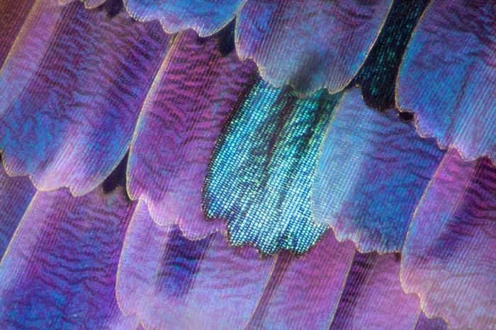 Удивительные снимки, сделанные под микроскопом (25 фото)