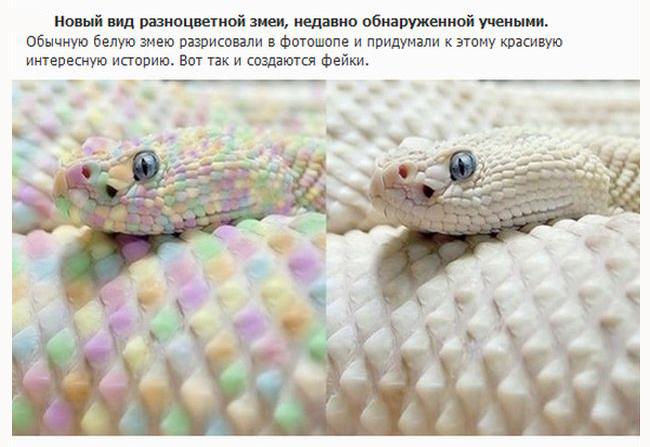 Вирусные фото, оказавшиеся фейками (12 фото)