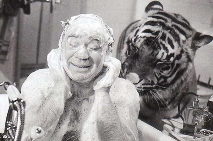 Как Евгений Леонов снимался с тиграми в «Полосатом рейсе» (4 фото)
