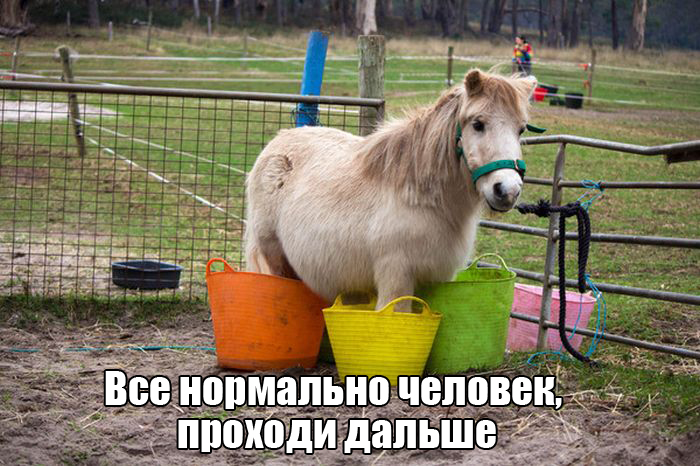 http://trinixy.ru/pics5/20151216/podborka_vecher_49.jpg