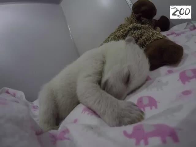 Спящий белый медвежонок