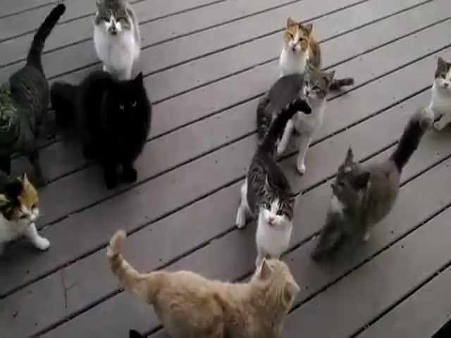 Коты просят еду