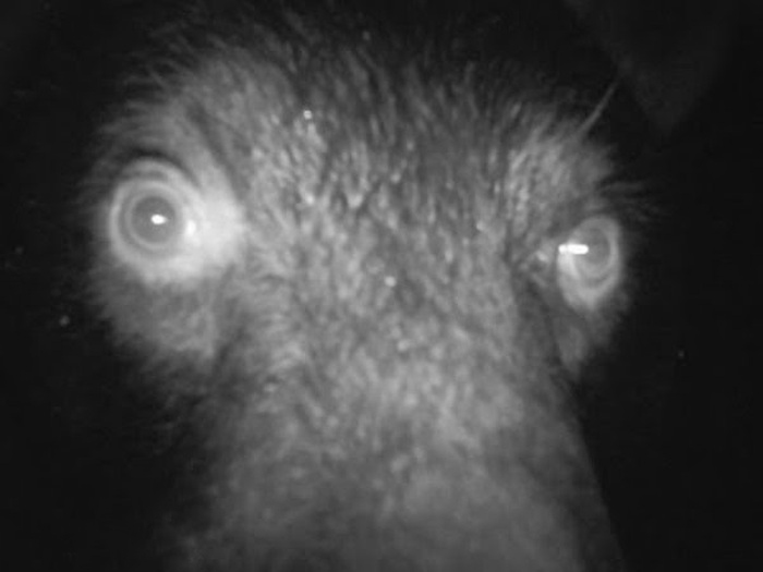 Странные снимки, сделанные фотоловушками (19 фото)