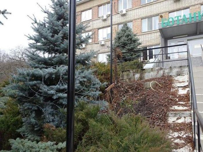 Лучший способ защиты елок от вандалов (4 фото)