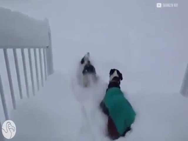 Животные, впервые увидевшие снег