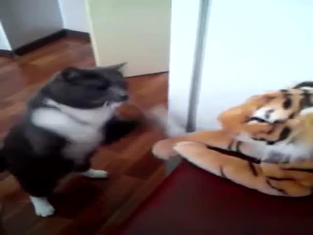 Кот дерется с игрушечным тигром