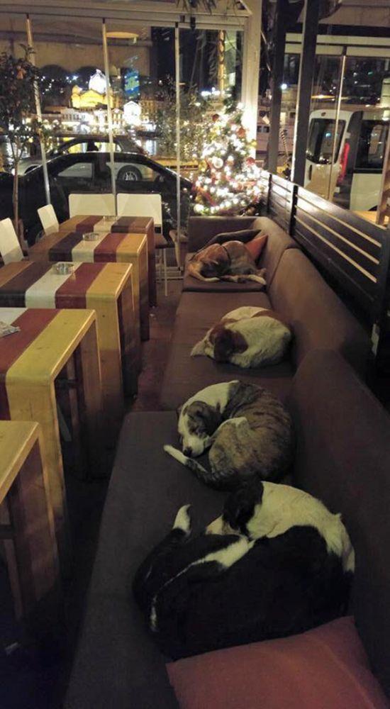 В греческом городе Митилини собакам разрешают спать прямо в кофейне (3 фото)