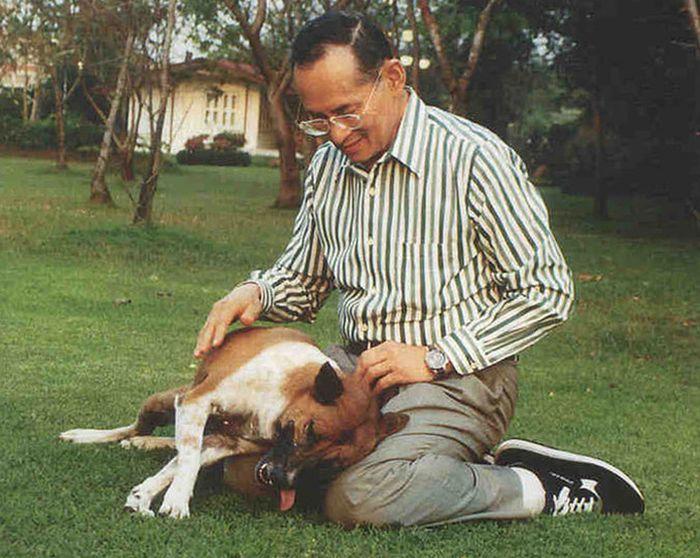 Жителю Таиланда грозит 37 лет тюрьмы за оскорбление собаки короля (2 фото)