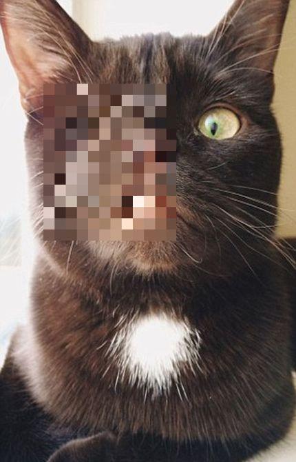 Одноглазый кот-пират по кличке Уэсли - новая звезда соцсетей (6 фото)