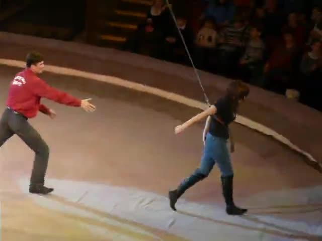 Курьезный случай на арене цирка