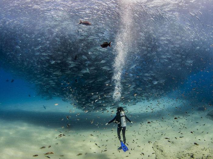 Топ-20 фотографий журнала National Geographic за 2015 год (20 фото)