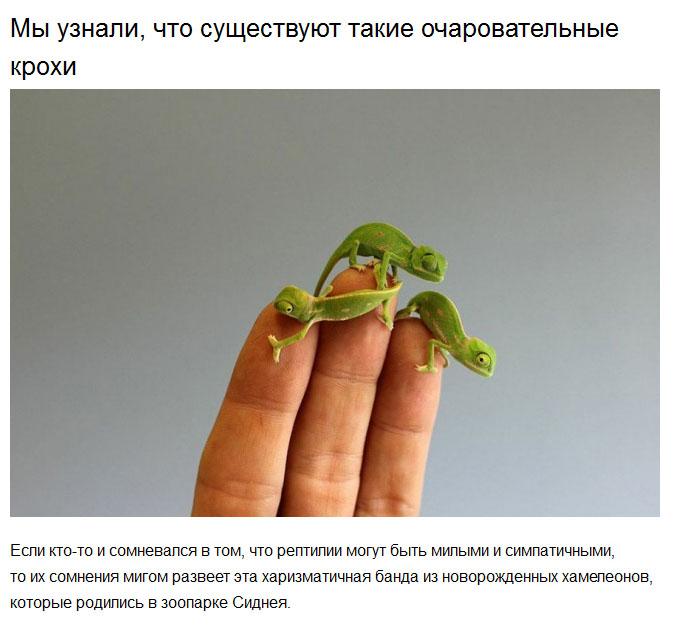 Милые животные, сделавшие этот год чуточку добрее (20 фото)