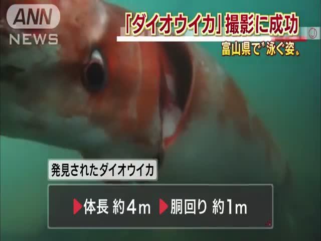 Огромный кальмар в японском порту