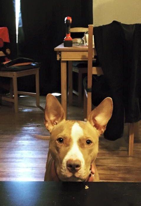 Недовольный пес с прекрасной мимикой (2 фото)