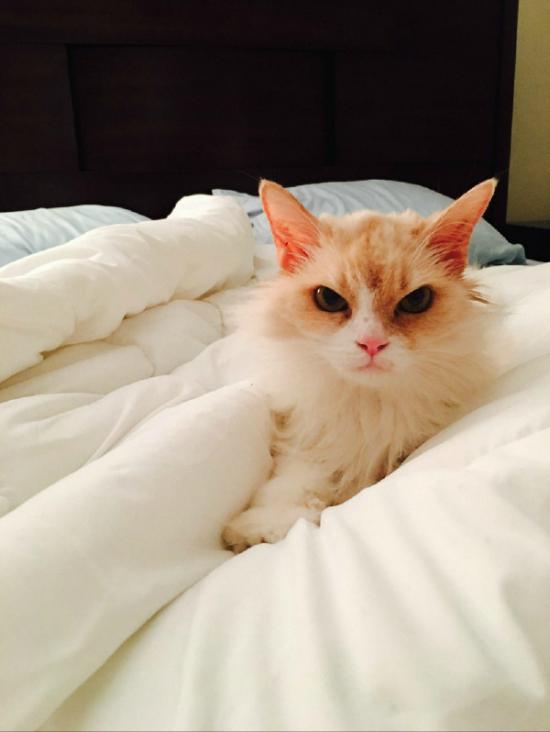 Кошачья благодарность (3 фото)