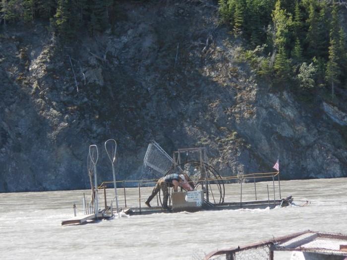 """Как """"черпают"""" рыбу на Аляске (10 фото)"""