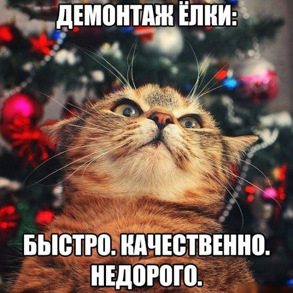 http://trinixy.ru/pics5/20160108/podborka_vecher_52.jpg