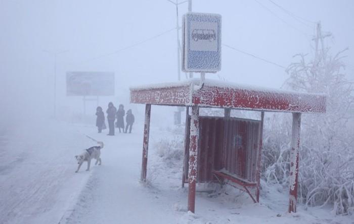 Как живется в жителям села Оймякон (21 фото)